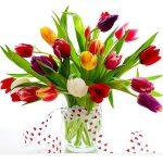 Hoa tulip thổi hồn vào không gian ngày tết