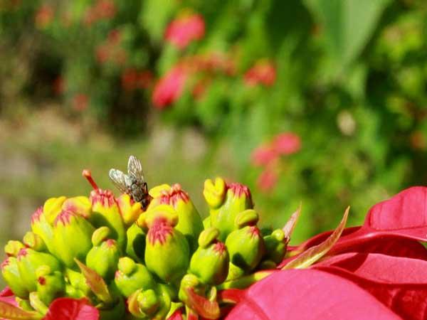 hoa-trang-nguyen-2
