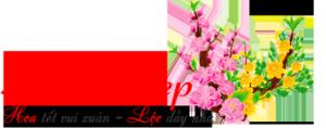 logo-hoatetdep