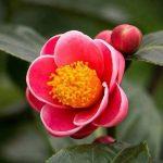 4 loại hoa tết đẹp nên mua trong dịp tết để mang lại may mắn