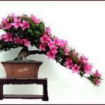 Ý nghĩa cây hoa đỗ quyên