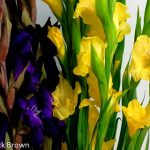 Hoa lay ơn – Hoa đẹp dễ trồng dễ chăm sóc