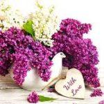 Hoa tử đinh hương và những ý nghĩa tuyệt vời