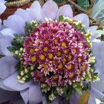Ý nghĩa và biểu tượng của hoa cúc