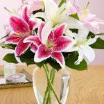 Hoa ly – Loài hoa đẹp cho ngày tết