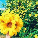 Nét đẹp của loài hoa dã quỳ