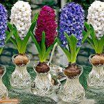 Tìm hiểu về cây hoa dạ lan hương