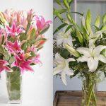 Hoa huệ tết – kỹ thuật trồng hoa huệ tết