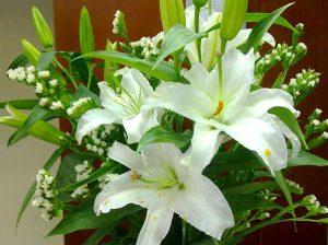 Hoa huệ tết trắng tinh khiết