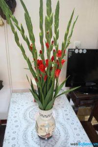 Hoa lay ơn đỏ đem lại lợi nhuận cao