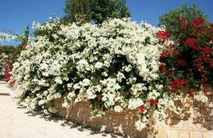 Hoa giấy mang ý nghĩa phong thủy
