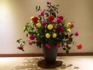 Hoa thược dược với nhiều màu sắc khác nhau