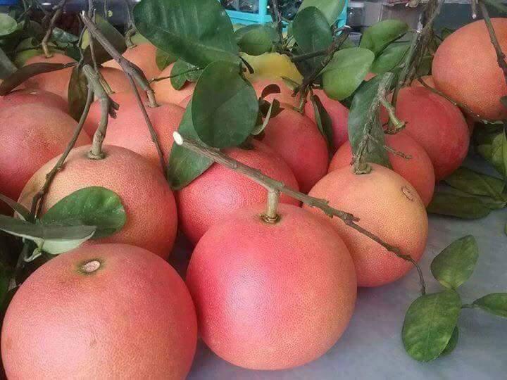 Cách trồng và chăm sóc cây Bưởi Phúc Kiến