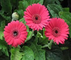 Các cánh hoa xếp chồng lên nhau